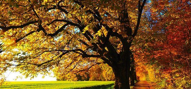 Wohntrends im Herbst diesen Jahres