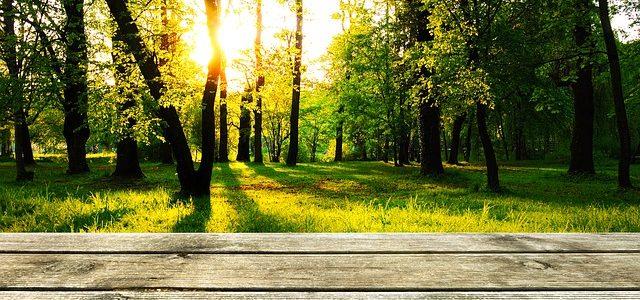 So reinigen und pflegen Sie Ihre Holzterrasse richtig!