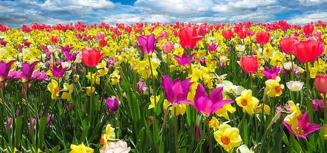 Wir können jetzt schon das Frühlingserwachen vorbereiten …