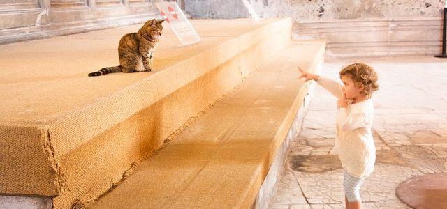 Welche Haustiere dürfen in der gemieteten Wohnung einziehen?