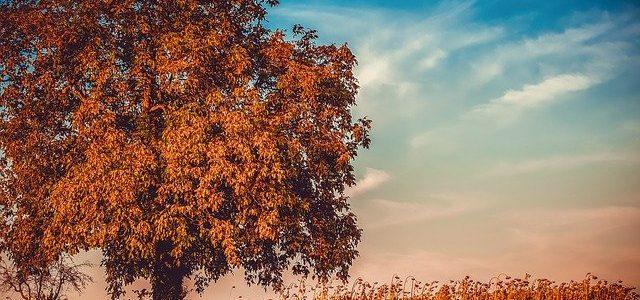 Was Hausbesitzer im Herbst beachten sollten…